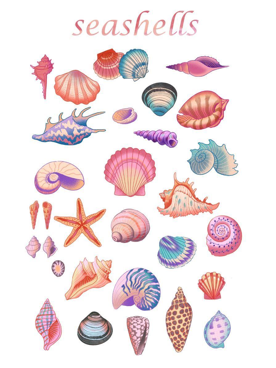 Seashells Png Clipart Watercolor Seashellmarine Wall Art Etsy In 2021 Etsy Wall Art Art Seashell Clipart