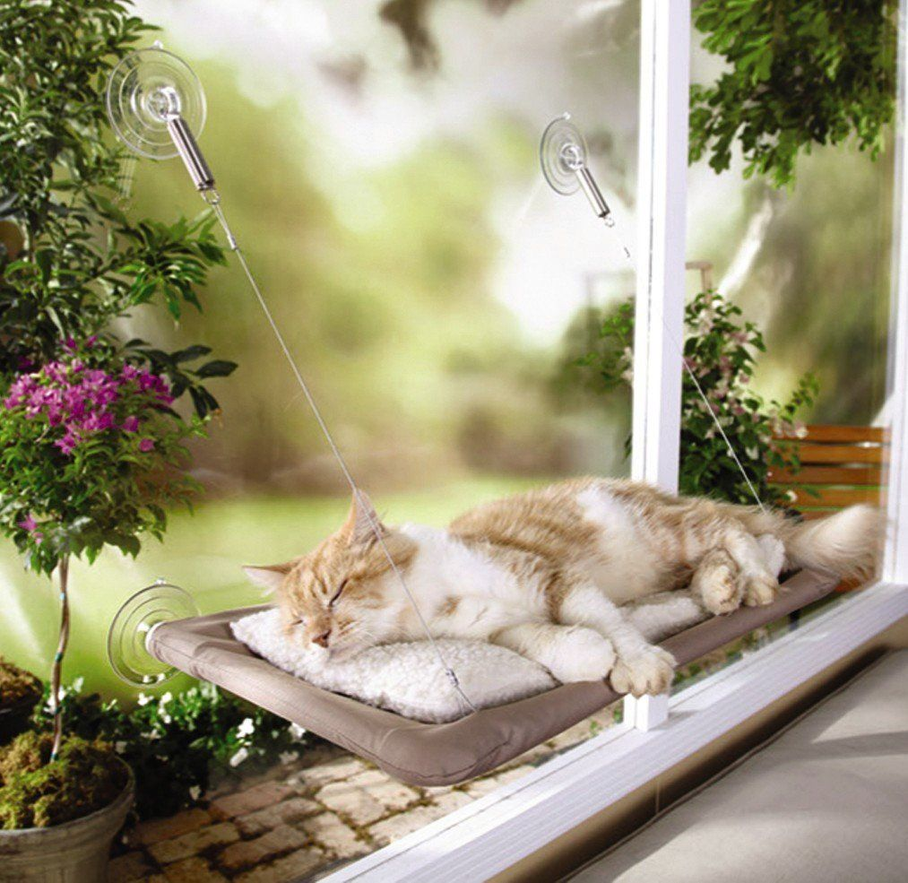 Window bed for cats  oster sunny seat window cat bed amazon pet supplies  stuff and