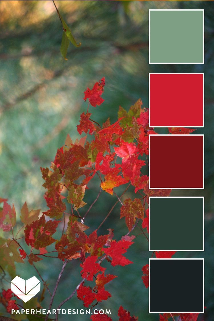 Color Palettes: Autumn Teal + Red #fallcolors Colo