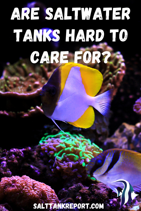 Pin On Saltwater Aquariums For Beginners