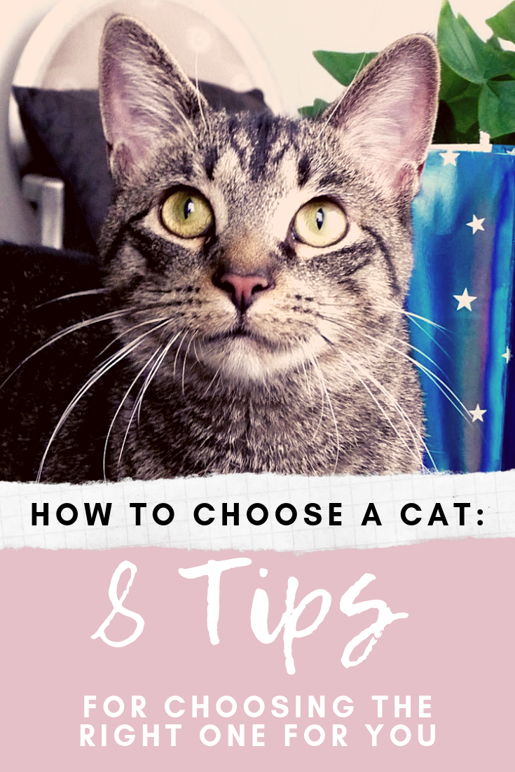 How to Choose a Cat 8 Tips for Finding the Right One for