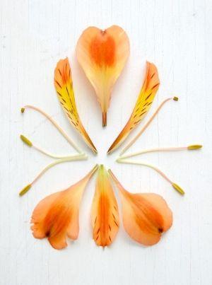 Anatomy Of An Alstroemeria Photo Credit Ez Pudewa Flower Structure Colorful Flowers Garden Flower Beds