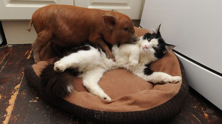 8 Unlikely Animal Friendships | The Onion - America's Finest News ...
