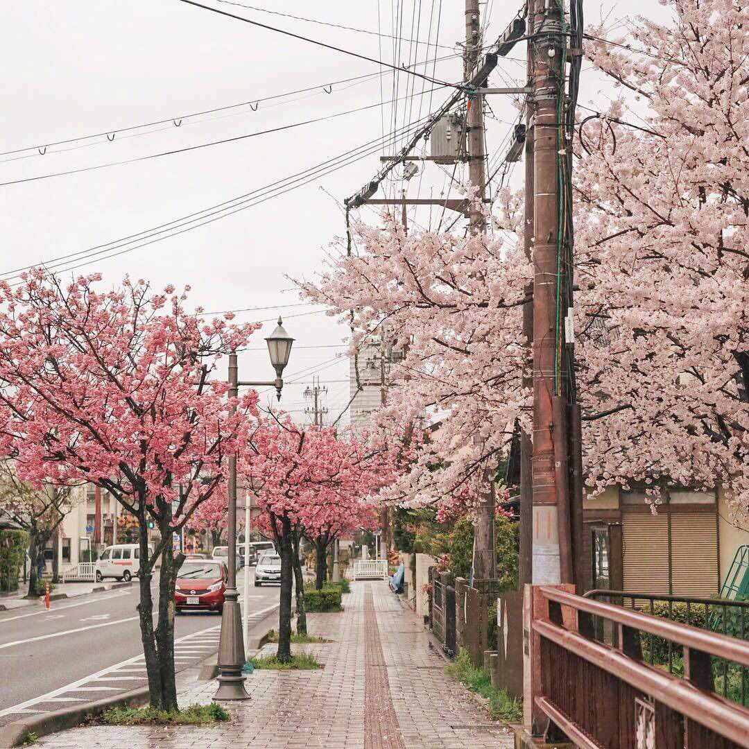 Edit Your Photos Of Cherry Blossoms Trees To Record The Beauty Of Life Aesthetic Japan Blossom Trees City Aesthetic