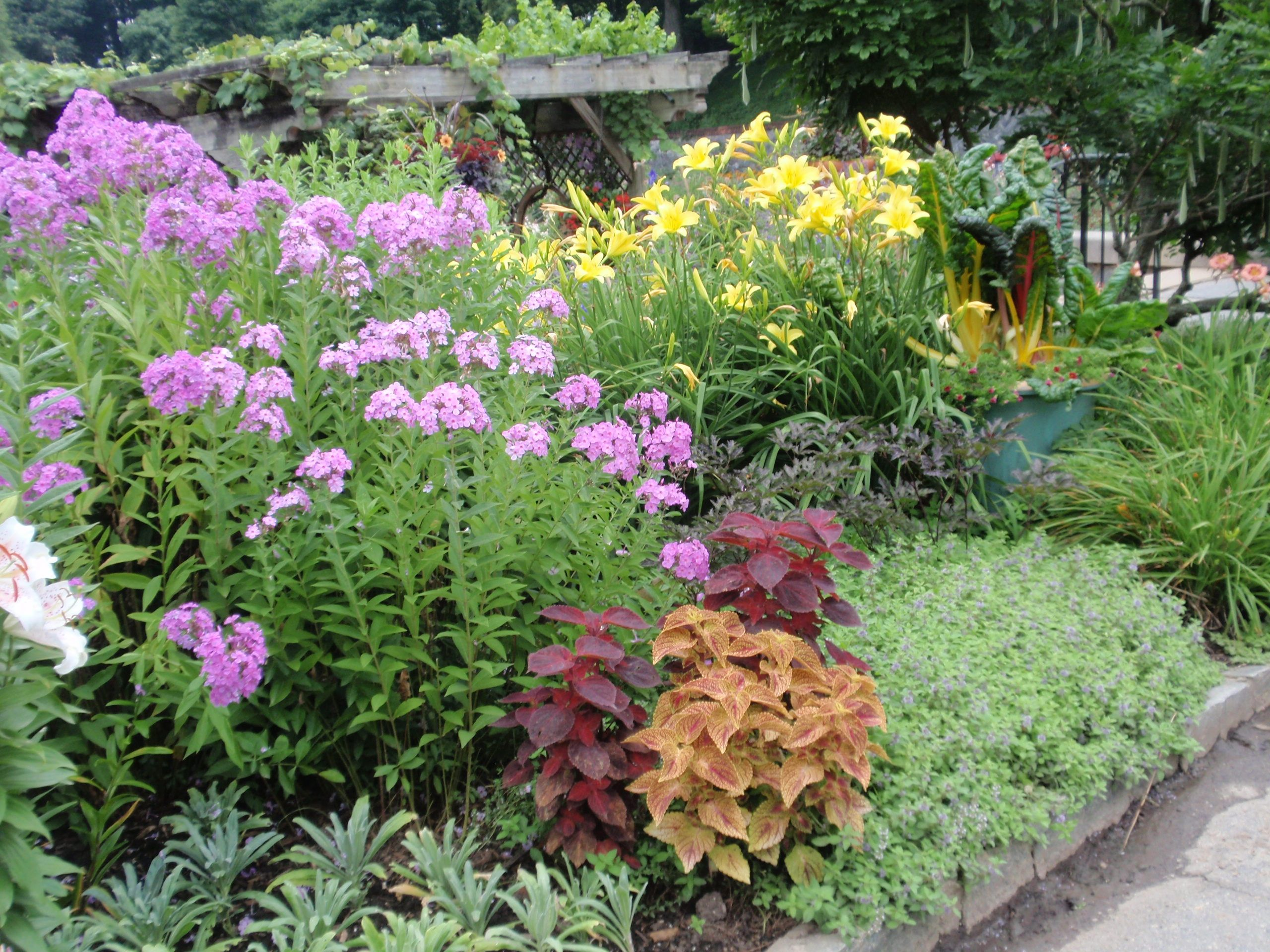 Perennials flower beds borders pinterest more for Small flower garden layout