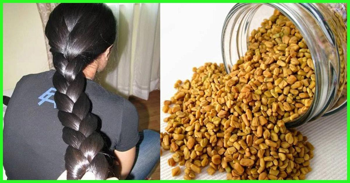 Fenugreek is a herb whose leaves and seeds have been used