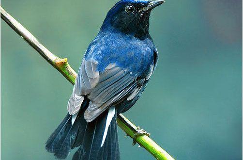 صور عصافير خلفيات عصافير مختلفة الأشكال ومتنوعة جميلة جدا موقع حصري Bird Pictures Animals Pictures