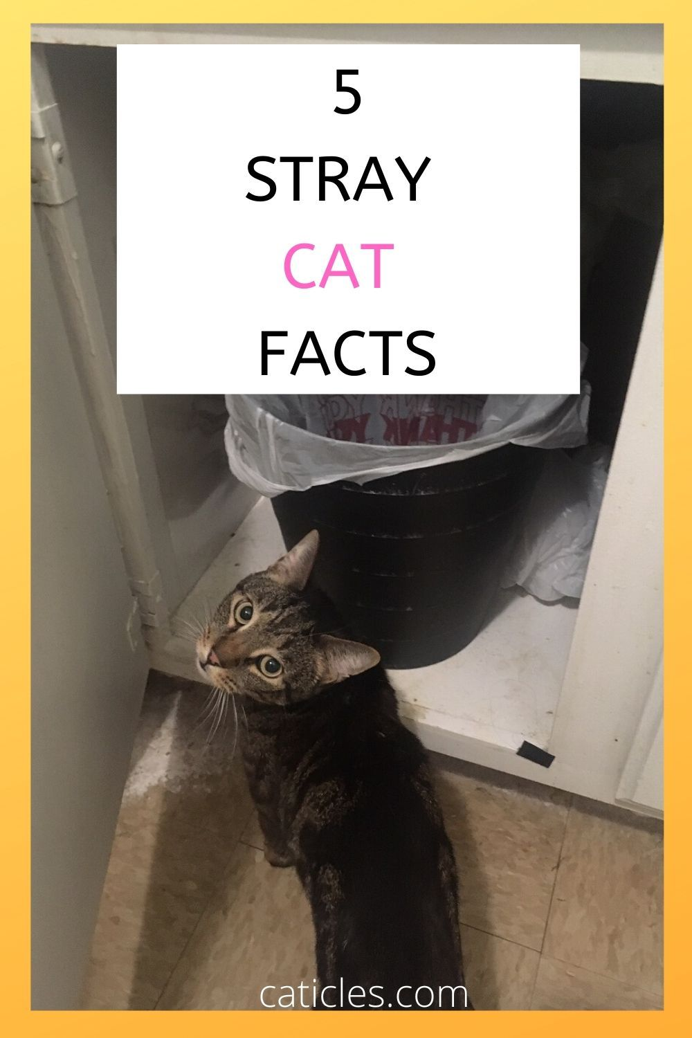 Stray Cat Behavior 5 Things You Need to Know Straight