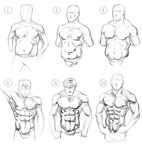 How to Draw Abs – Anatomy   Muscles, Anatomy and Sketches