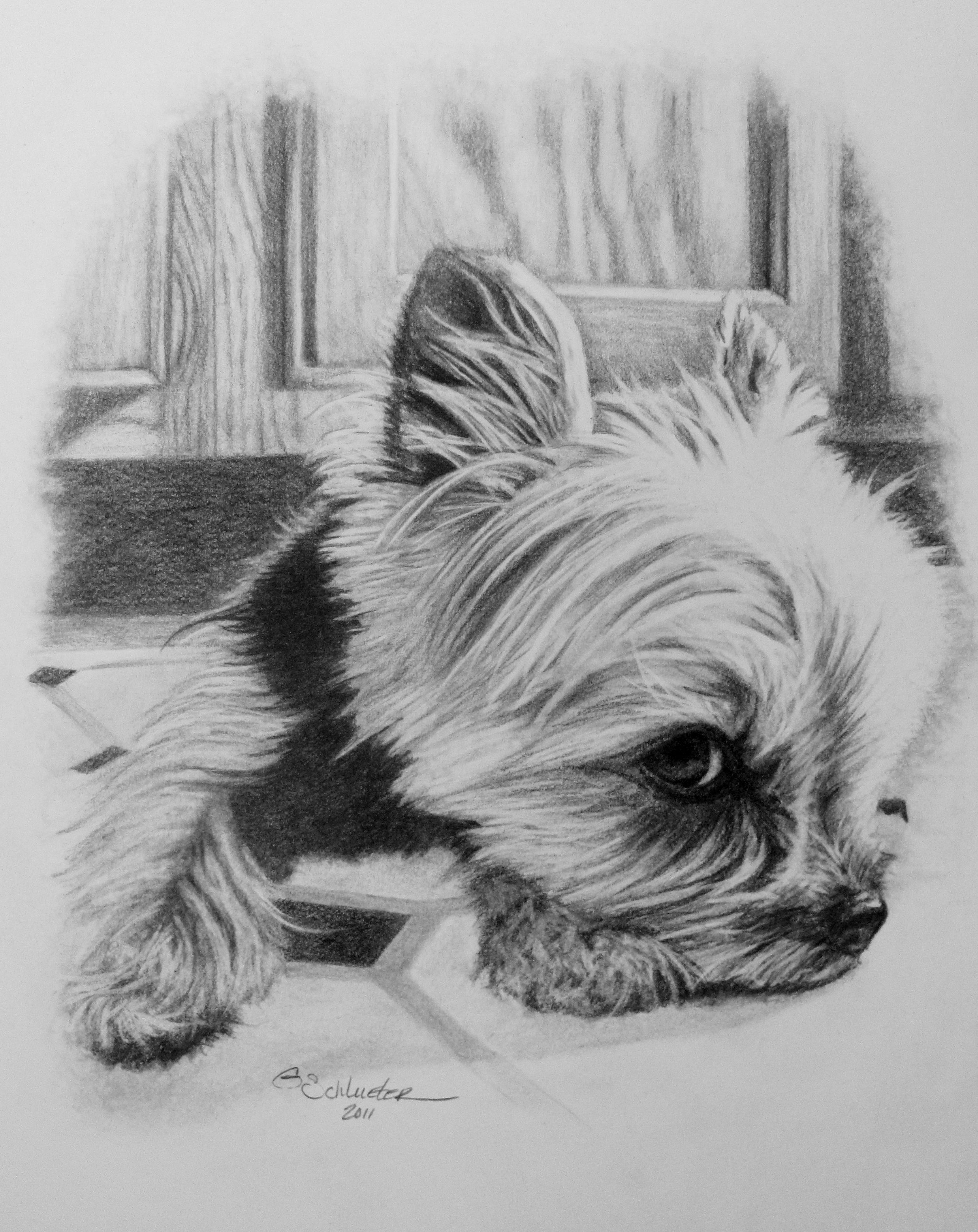 The Little Yorkie Sketch Are You Looking For A Special Unique Gift For A Pet Lover Give T Dibujos Faciles De Perros Dibujos De Animales Dibujos De Perros