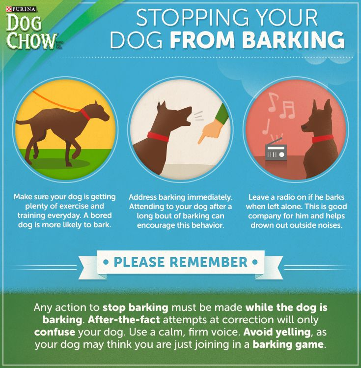 how to get my dog to stop barking
