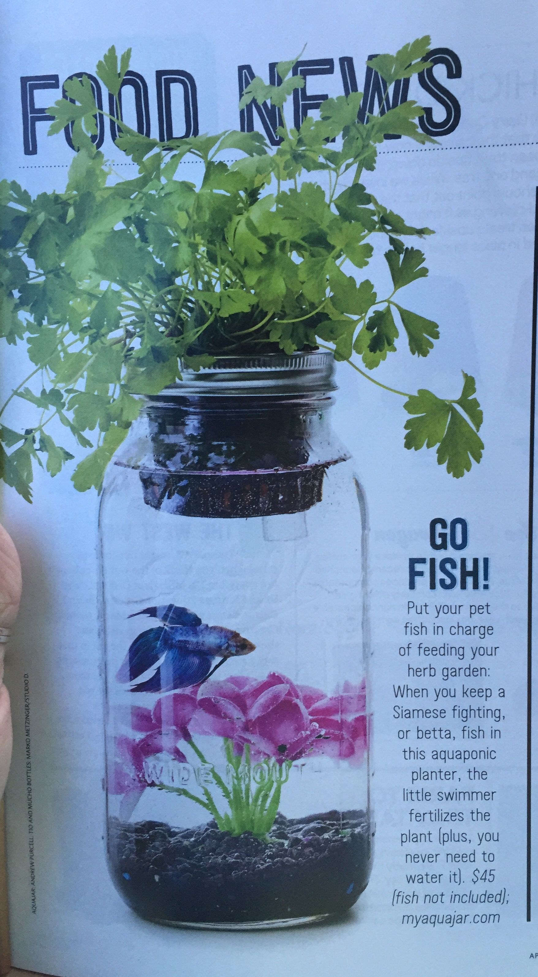 Beta fish aquarium in mason jar | Mason jars! | Fish, Plants, Beta fish