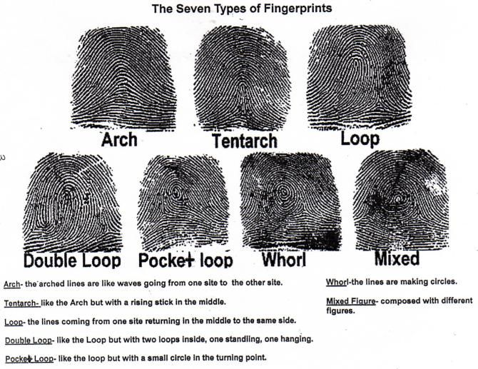 Seven Types of Fingerprint Worksheet | School | Pinterest ...