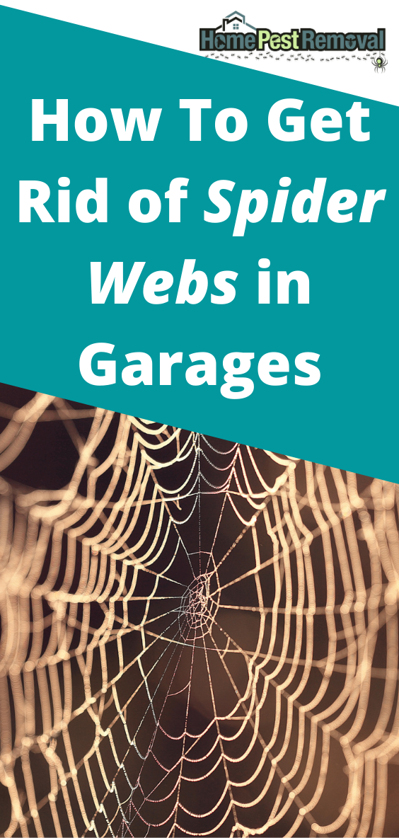 How To Get Rid Of Spider Webs In Garages Get Rid Of Spiders Spider Web Spider