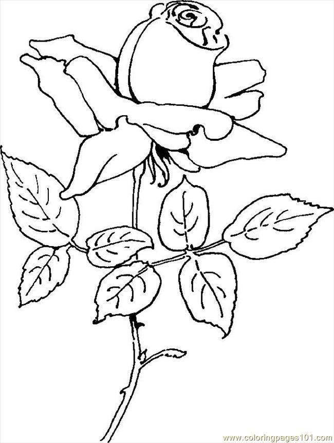 Pin de Patricia Iannone en Diseños - Rosas | Pinterest | Rosas