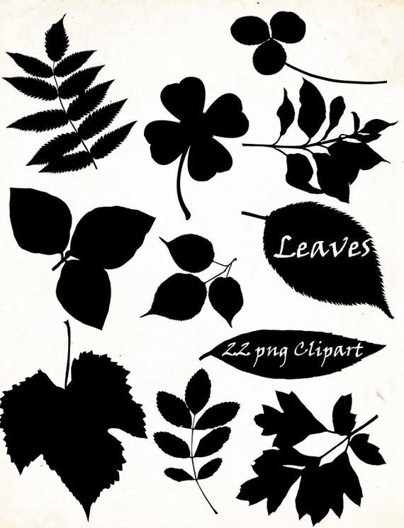 Autumn Leaves Silhouette Png 22 Png Clipart Instant Etsy In 2021 Leaf Silhouette Silhouette Png Autumn Leaves