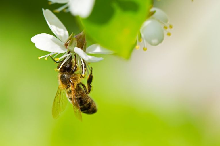 50,000 bumble bees and honey bees killed in Oregon, US. When a bee reaches a new nectar source, it shouldn't result in the death of its whole colony. We need better insecticidal controls and we all deserve better insecticides, given their catastrophic history. #insecticides #bees #pollution #Oregon