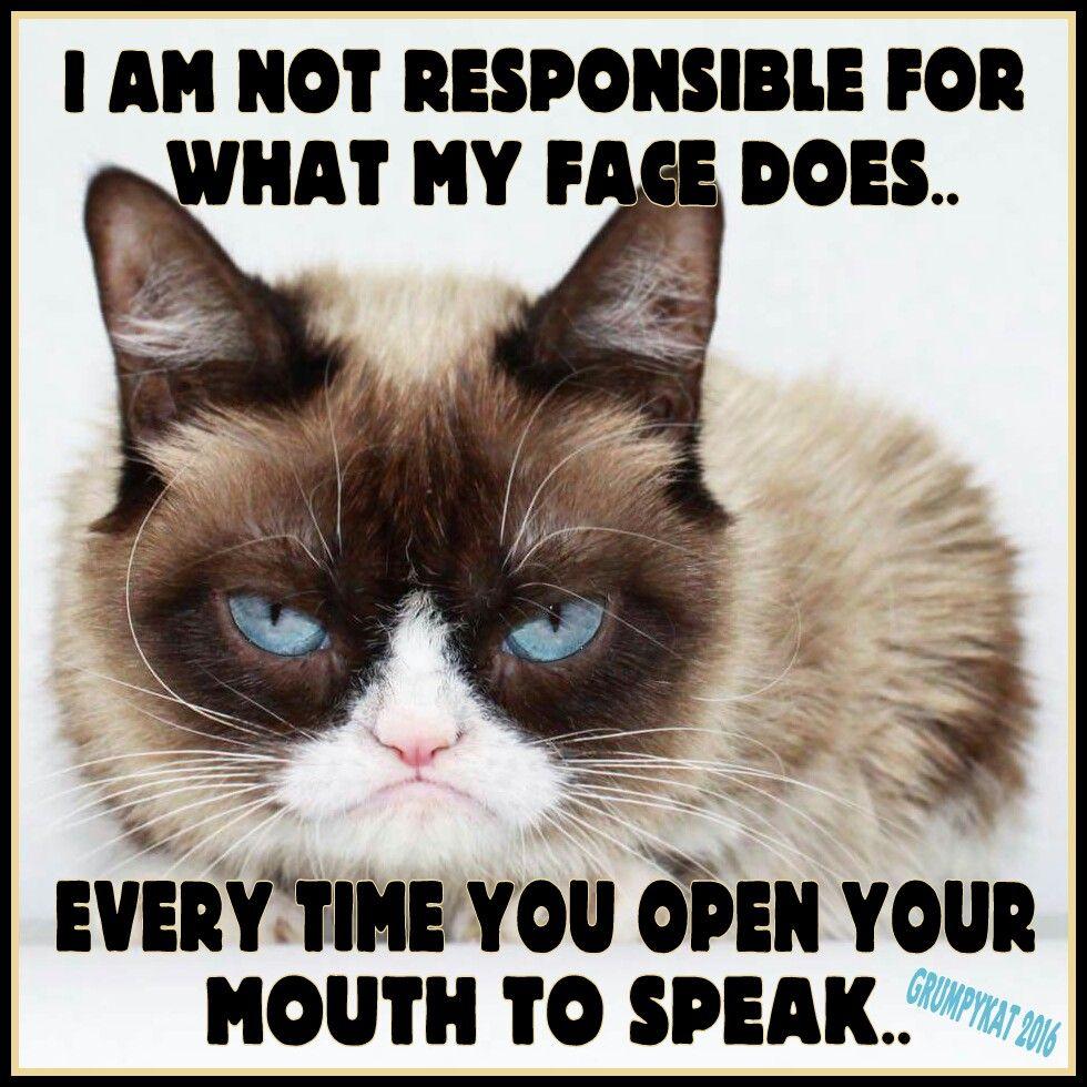 04b3a4ae425b288df2829bc47a88940d another grumpy cat meme by the other grumpy kat 2016 don't speak,Busier Than A Meme