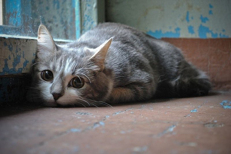 Lonely Cute Cats Cats Cute Animals