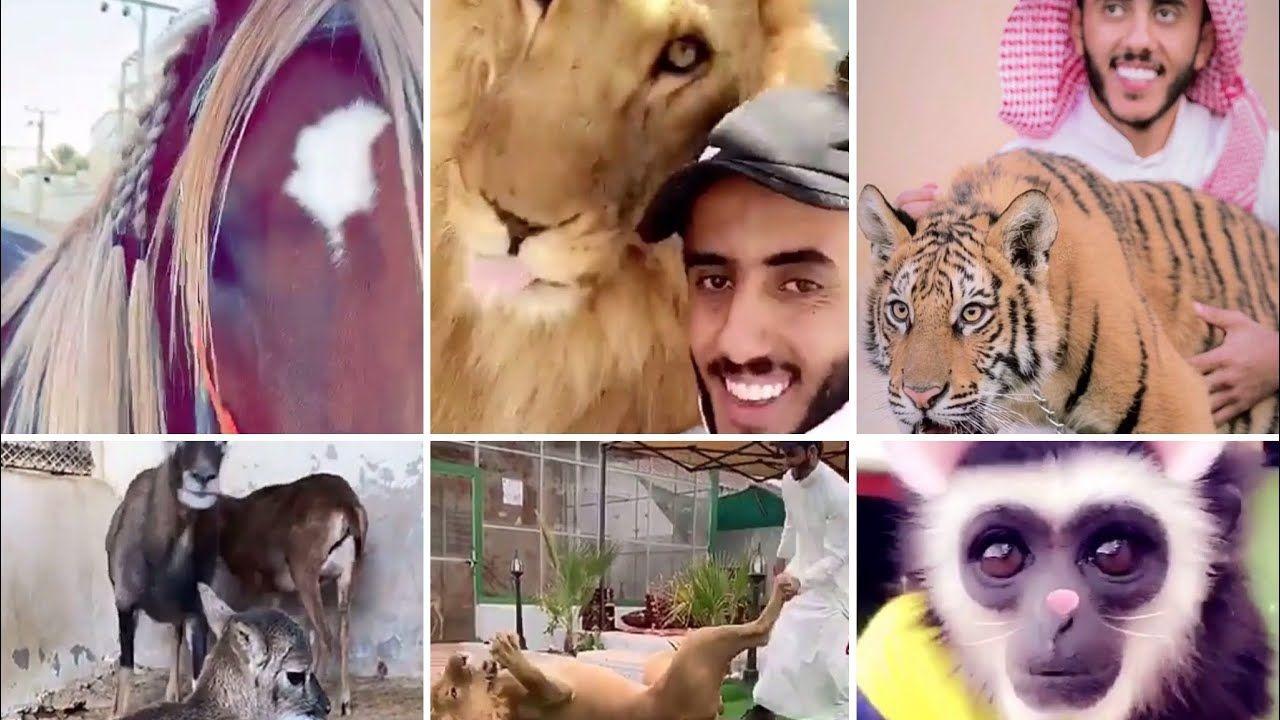هلا بزين وبالحب كسار الله يحفظه Animals