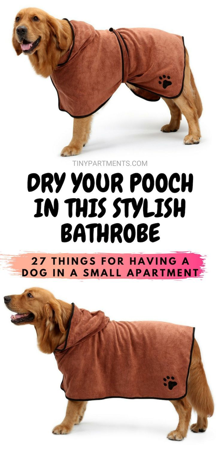 27 Things That Make Having A Dog In A Small Apartment A
