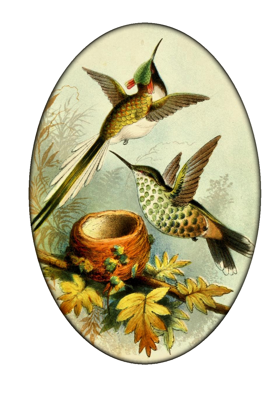 vintage Hummingbirds #2 from Create with TLC | Круглые картинки ...