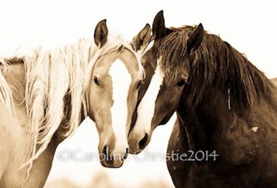Wild Horses of the Sand Wash Basin, CO. The second photo in is the Golden Sepia  5x7 print with an off white mat fits into an 8x10 standard