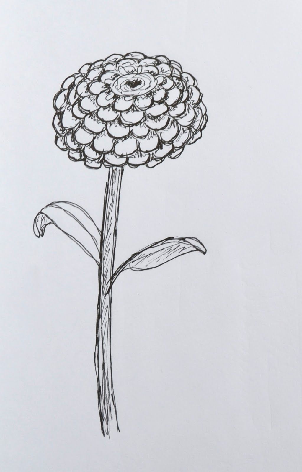 Coloring Sheet Of Zinnias Color The Flower With Colored Pencils