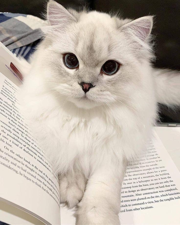 Cute Cats Of Instagram auf Instagram: Das süßeste Lesezeichen aller Zeiten Senden ... - #aller #auf #Cats #Cute #Instagram #Lesezeichen #quotDas #Senden #süßeste #Zeitenquot #funnykittens
