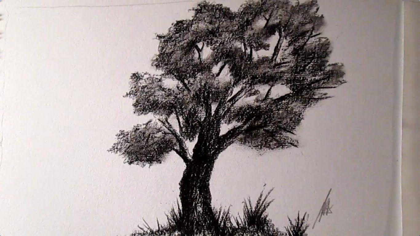 Imagenes De Como Dibujar Un Arbol