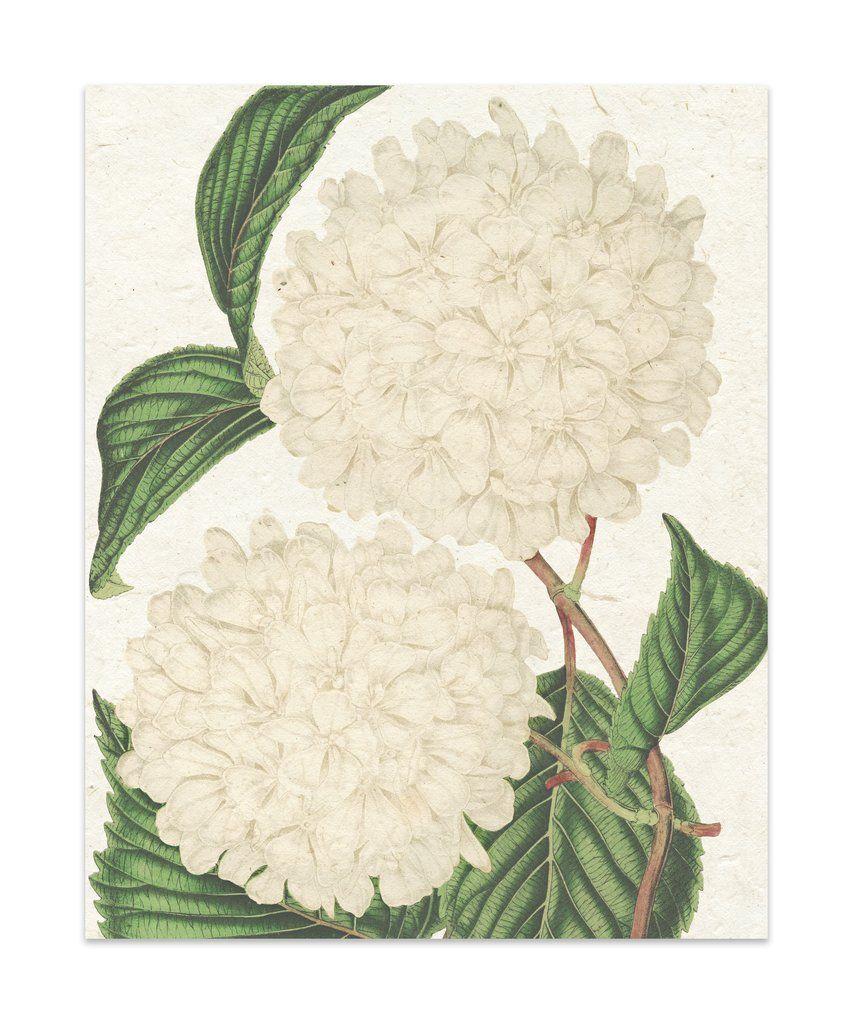 Handmade Paper Lokta Art Wallart Decor Kavkadesigns Floral Botanicals Flowers Flowerpaper Succulent Graphic Art Print Art Flower Art