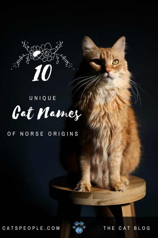 10 Unique Cat Names of Norse Origins Male Edition