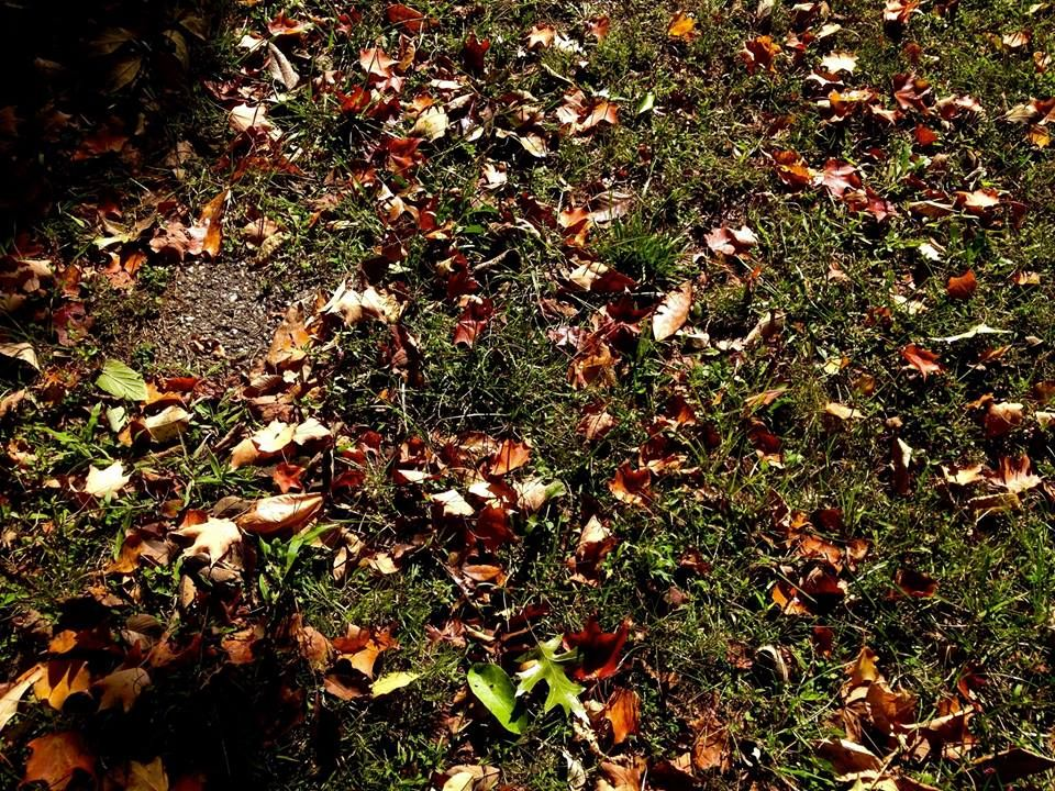 Blacktop and leaves