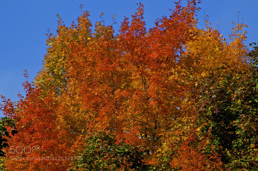 Autumn Before the Fall by smaxadams #nature