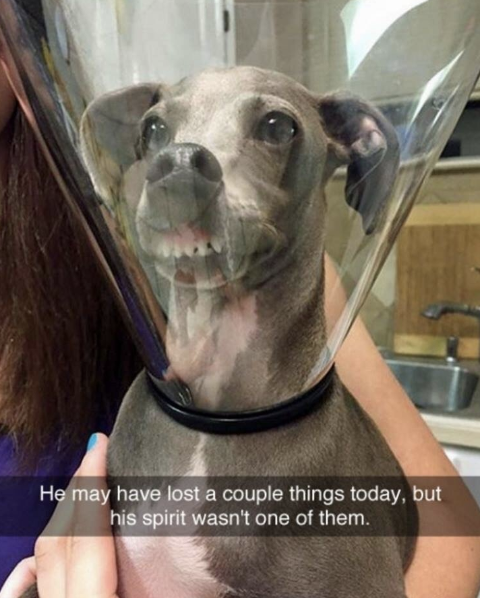 100 Animal Memes That Will Keep You Laughing For Hours Funny