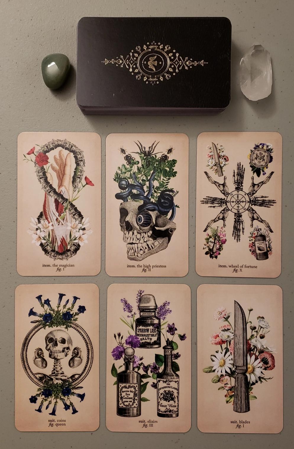 new deck antique anatomy tarot  ephemera edition  tarot