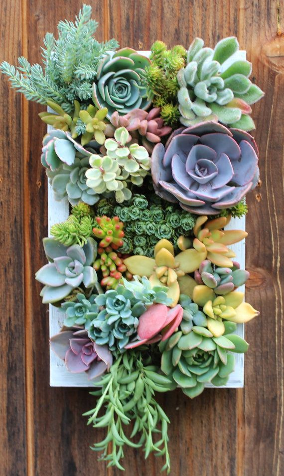 """PLANTED 12"""" X 7""""-Custom Succulent Vertical Garden Made To"""