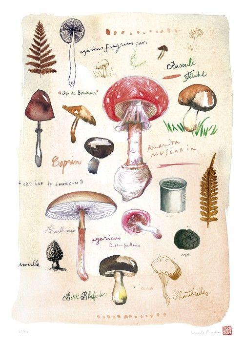 Science Biology Mycology Mushroom Gus Toadstool Chart 12X16 Inch Framed Print