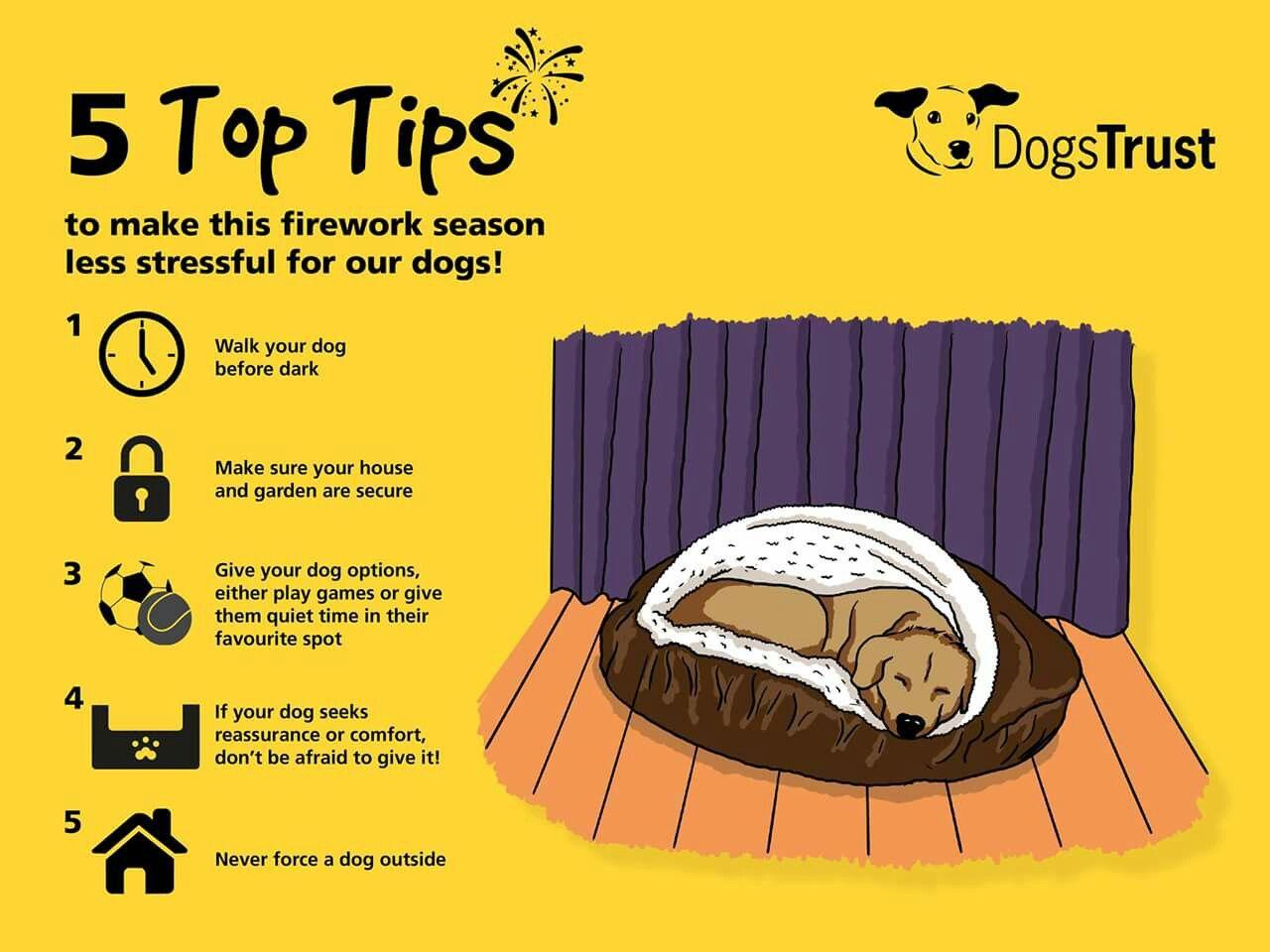 Firework safety for dogs Dogs trust, Dog skin care, Dog