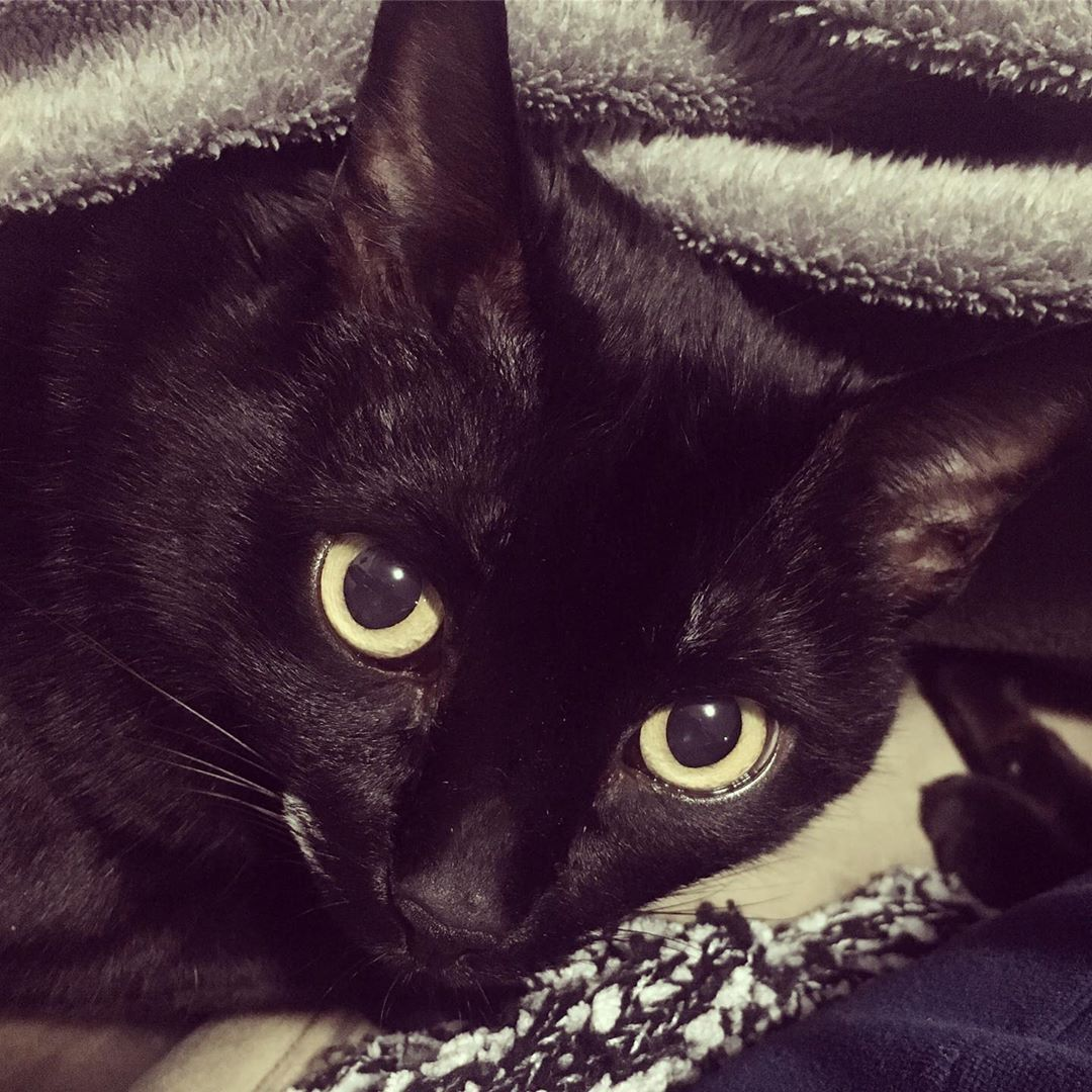 Understanding Changes In Behaviour In Cats Cats Animals Behavior