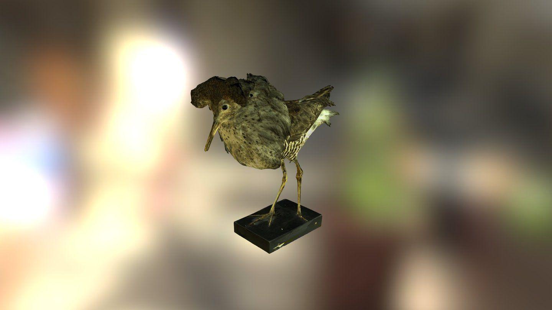 Oiseau by daniel68