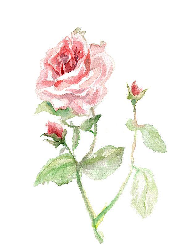 Rose Rose Impression Imprimer Des Giclees De Peinture Originale