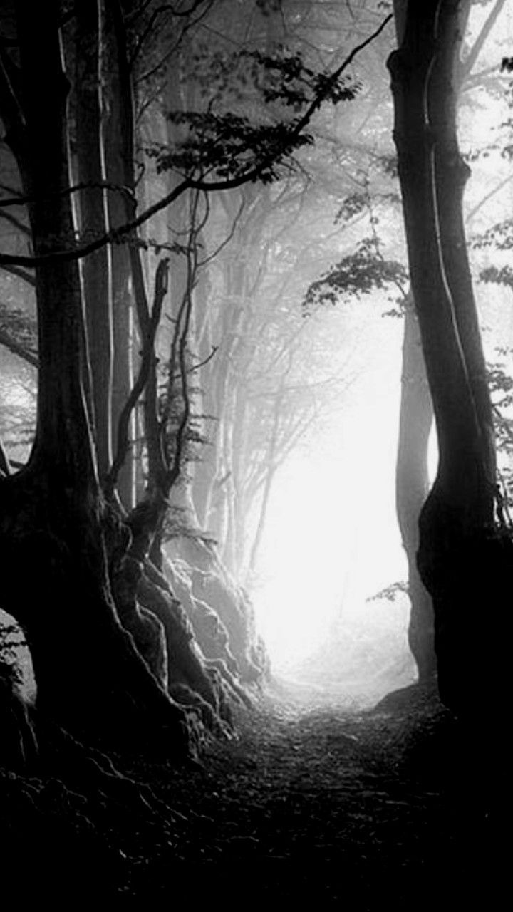 Nature Iphone Wallpaper Black And White Landscape Black Tree Dark Photography