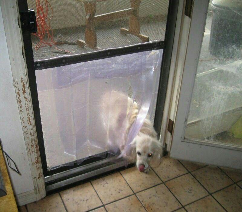 Cheap Dog Door Pets Animals Dogs Diy Doggie Door Pets