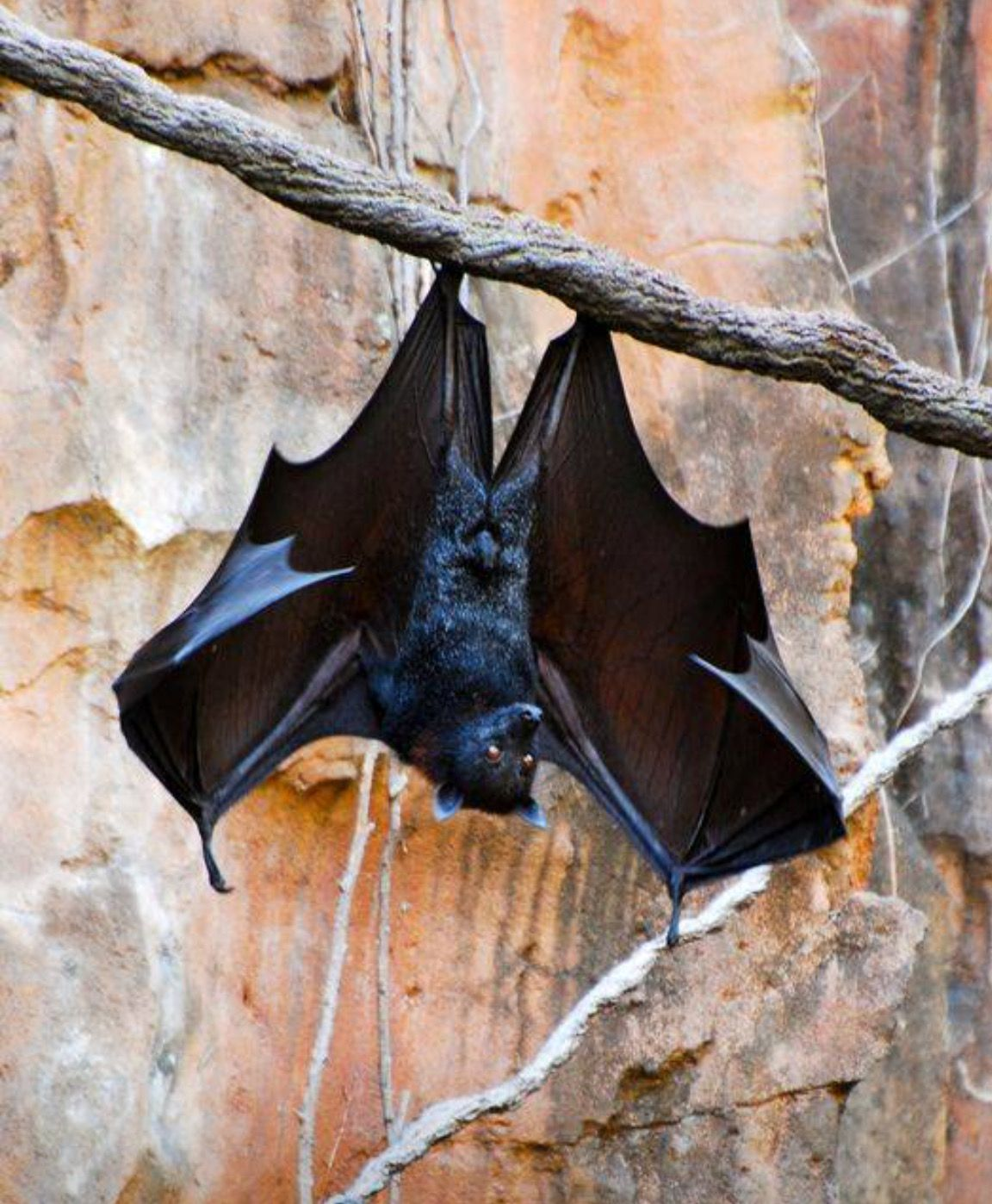 Pin By Sheri Lynn On Bats