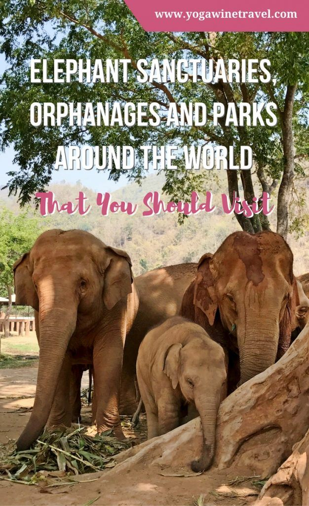 Elephant Sanctuaries Orphanages And Parks Around The World That You Should Visit Yoga Wine Travel Elephant Sanctuary Wildlife Travel World Travel Guide