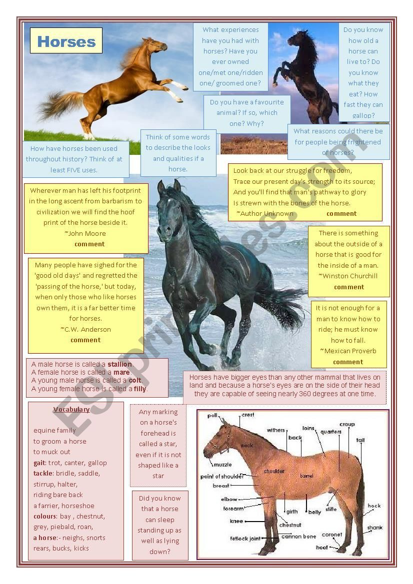 With Some Of My Clsses We Re Going To Read War Horse This Term And To Start Off I M Going To Use This Conversation Sheet To Lead In In 2020 War Horse [ 1169 x 826 Pixel ]