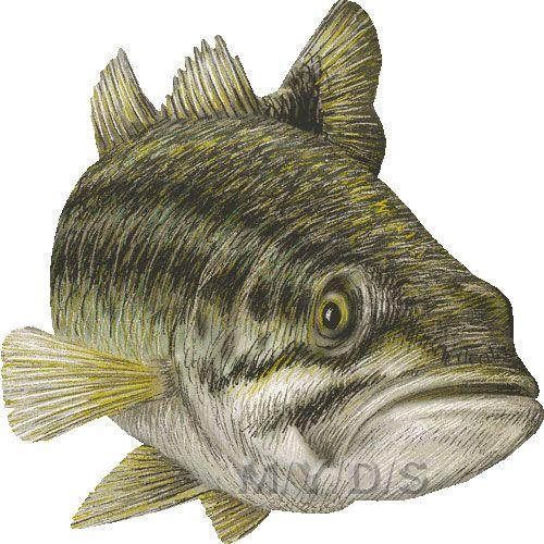 Largemouth Bass Black Bass Clipart Graphics Free Clip Art Fish Art Fish Drawings Fish