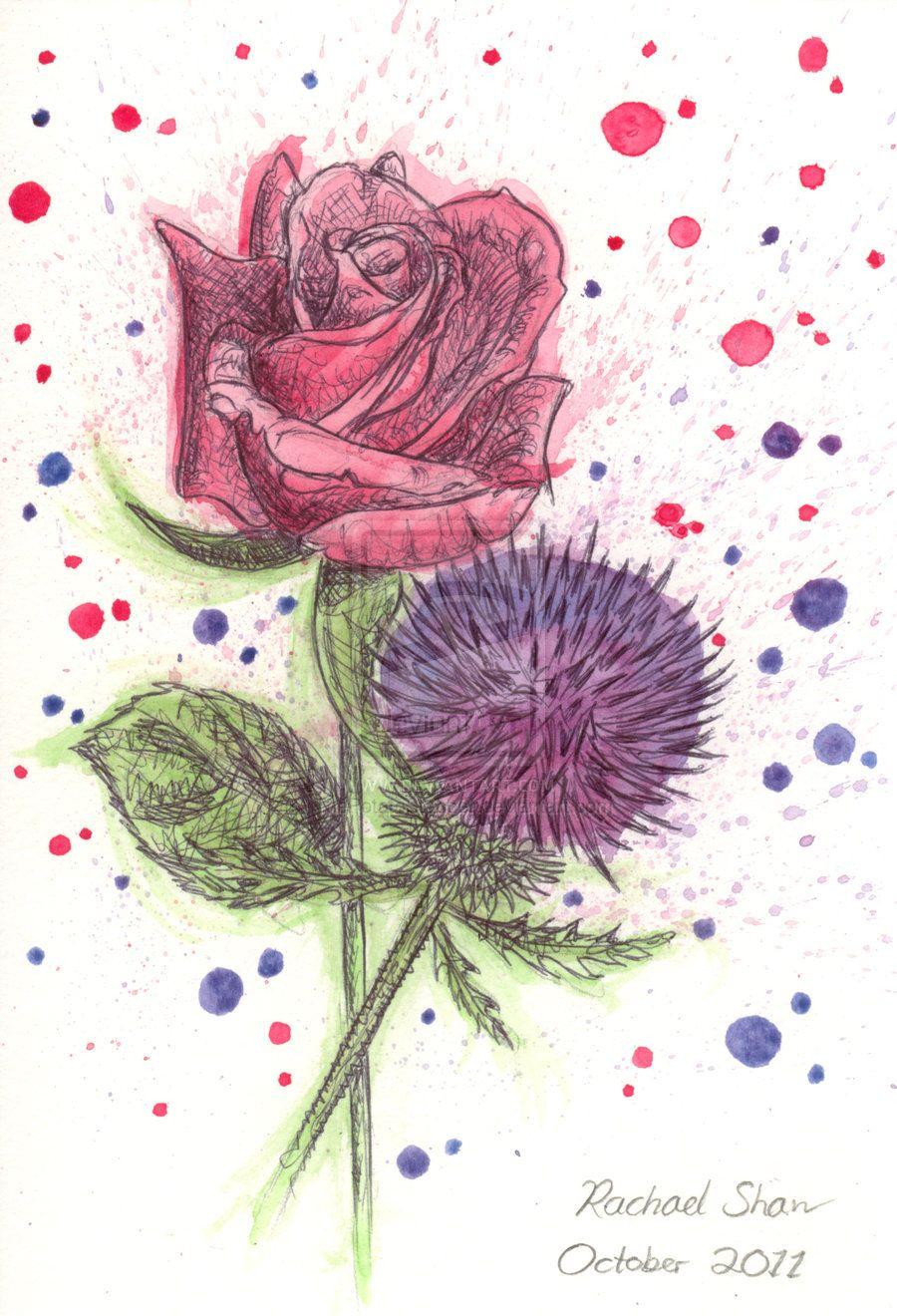 Http Thepotatostabber Deviantart Com Art A Rose And Thistle 265384024 Thistle Tattoo Thistle Red Roses