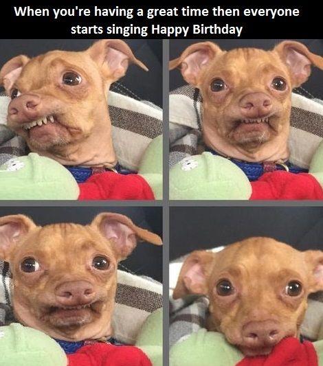 Dog-happy-birthday-song-awkwar